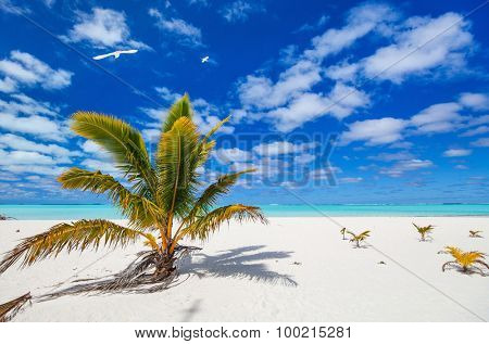 Stunning Honeymoon island tropical beach with palm trees, white sand, turquoise ocean water and blue sky at Cook Islands, South Pacific