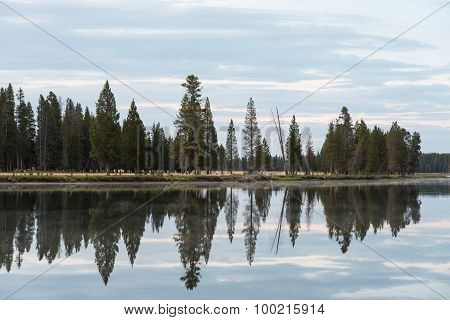Yellowstone River Tree Reflection