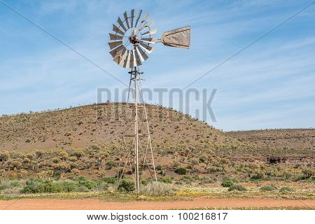 Windmill Between Wild Flowers With Thousands Of Quiver Trees In The Back