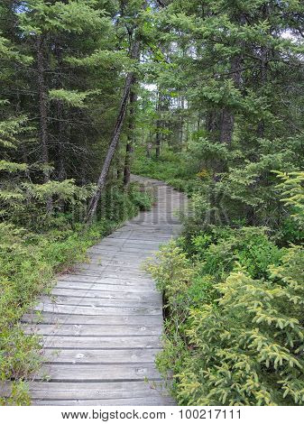 Treed Boardwalk
