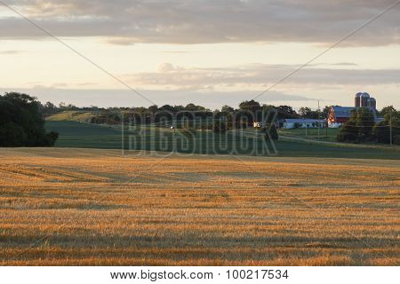 Golden Wheat Farm Morning