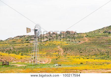 Windmill Between Flowers At Boemansuitkyk