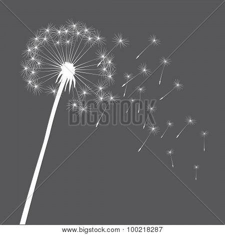 Grey Illustration of Dandelions