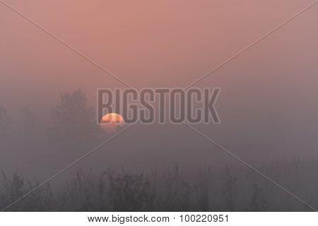 Marsh Fog Sunrise