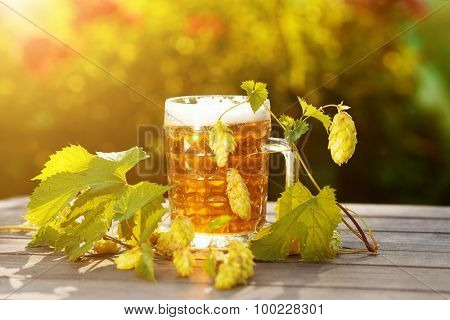 Beer. Mug with beer and hop on sunset summer autumn background. The backlit. Summertime, the party countryside in nature.
