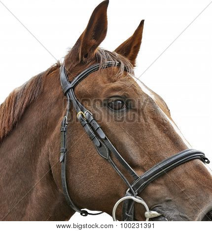 Close Up Head Shot Of A Brown Horse