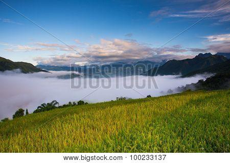 Terraced rice field with cloud in Laocai, Vietnam