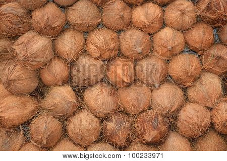 Coconut with shells making a background