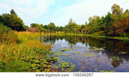 Picturesque Summer Pond With Water-lilies