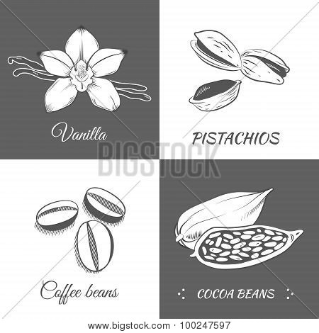 Vector Illustration With Vanilla, Pistachios, Cocoa And Coffee Beans