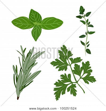 Vector Fresh Parsley, Thyme, Rosemary, And Basil Herbs. Aromatic Leaves Used To Season Meats, Poultr
