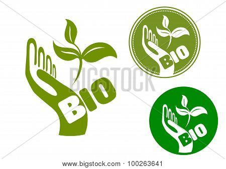 Bio concept with a hand holding leaves