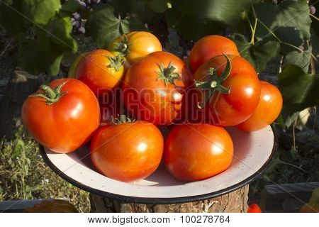 Tomatoes On A Plate