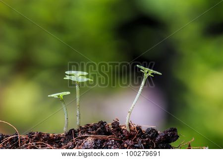 Green Sprout On Ground