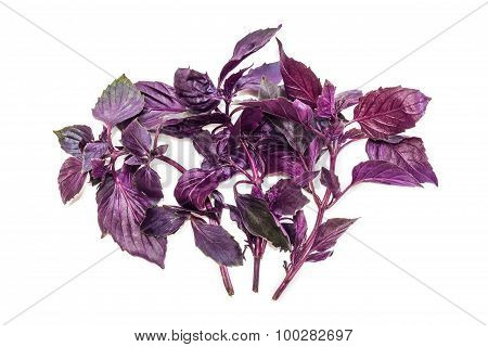 Several Branches Of Basil On A Light Background