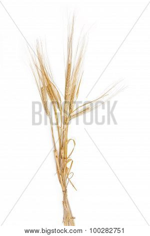 Bunch Of Barley With Spikelet On A Light Background