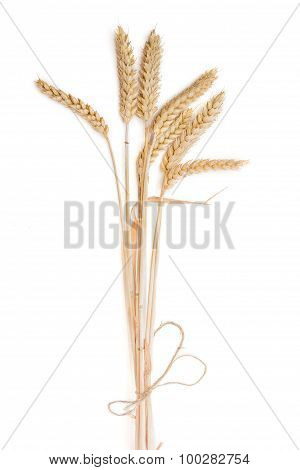 Bunch Of Wheat Ears On A Light Background