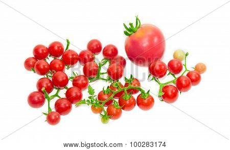 Several Branches Of Cherry Tomato And One Conventional Tomato