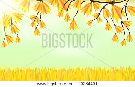 Autumn Background. Grass And Leaves
