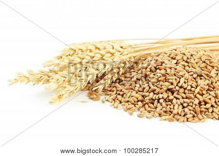 Ears Of Wheat And Wheat Grains On White Background
