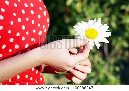Woman Guesses On Chamomile Flower, Ourdoor