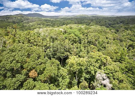 Canopy of rainforest