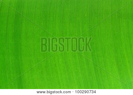 Banana Leaf Pattern