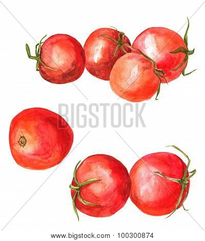 Set of  watercolor drawing tomatoes