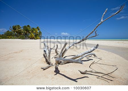 Deadwood On White Sand Beach And Palm Tree