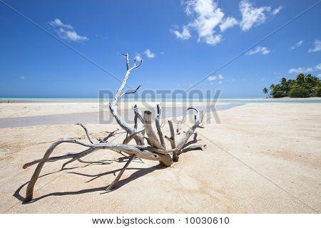 Deadwood On White Sand Beach
