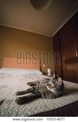 Tabby Cat On A Bed At Home