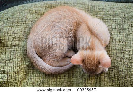Orange Tabby Kitten From Above