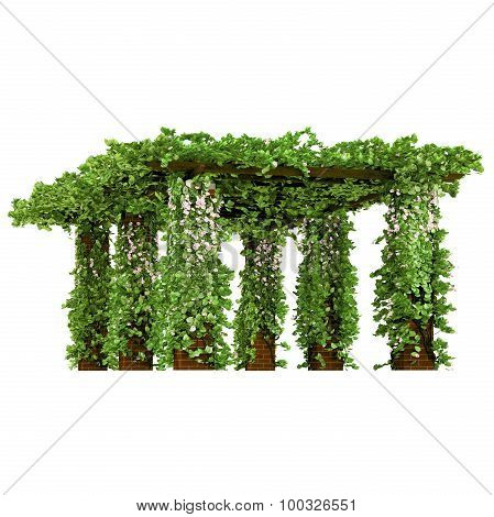Outdoor arbor with ivy pergola