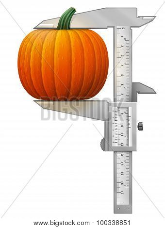 Vertical Caliper Measures Pumpkin Fruit