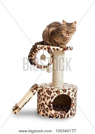 Cat house and the cat. Isolate on a white background