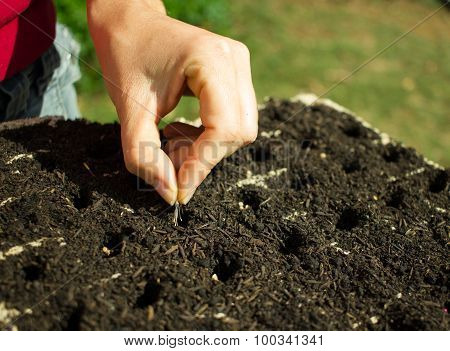 Woman Planting Seeds