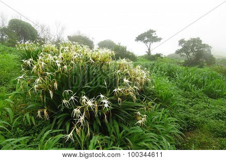 Monsoon Vegetation