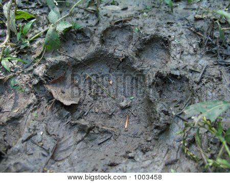 Bear Footprints