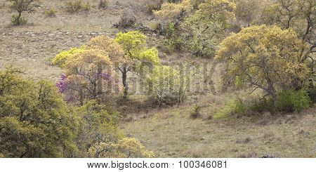 Trees On A Texas Hill Country Hillside During Spring