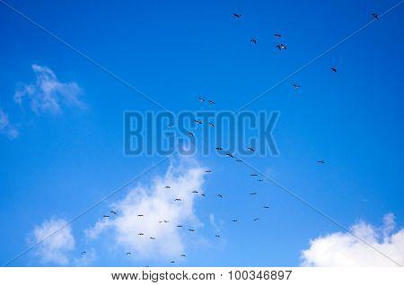 Immigrating Birds
