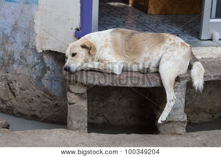 Homeless Dog Sleeping On The Street , India