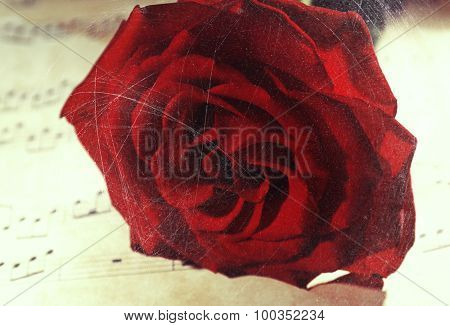 Beautiful red rose on music sheet, closeup