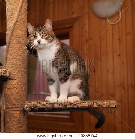 Grey Tabby Cat And Kittens Sitting On Scratching Post