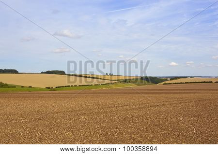 Late Summer Agricultural Scenery