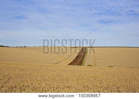 Wheat Field Vista