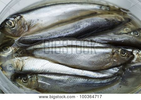 Spice Salted Sprats