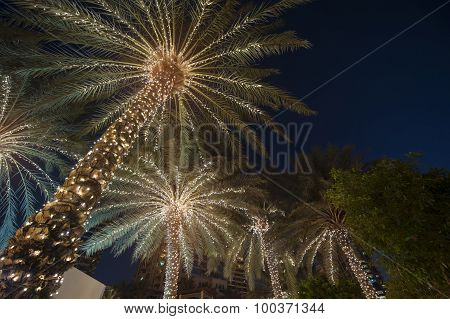 Christmas Background Palm Tree