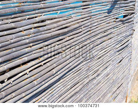 Yellow Reeds Cut