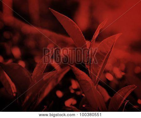 Green leaves in Sri Lanka Environment Concept