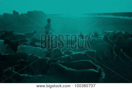 Kazakh Boy Herds Goats Milking Gobi Mongolia Concept